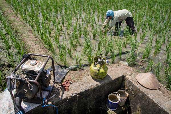 Petani menggarap lahan pertanian - ANTARA/Mohammad Ayudha