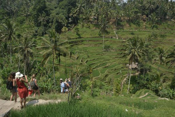 Wisatawan menikmati pemandangan pedesaan sawah berundak (terasering) di Desa Tegallalang, Gianyar, Bali, Senin (1/10). - Antara/Fikri Yusuf