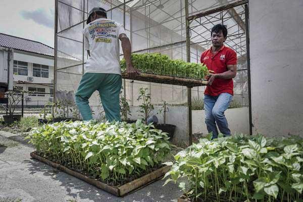 Bibit tanaman cabai. - ANTARA/Hendra Nurdiyansyah