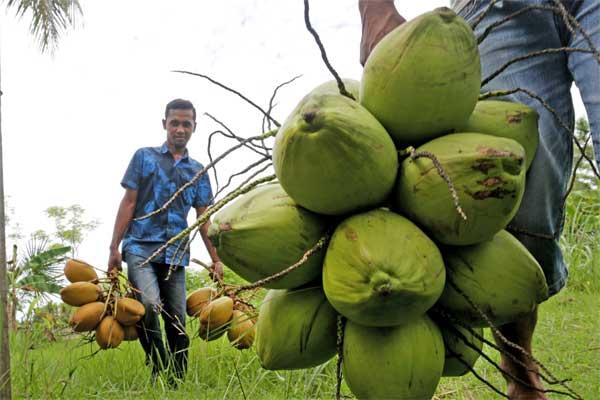 Pedagang musiman membawa buah kelapa muda untuk dijajakan sebagai minuman berbuka puasa di Desa Cot Cut, Aceh Besar, Aceh, Sabtu (27/5). - Antara/Irwansyah Putra