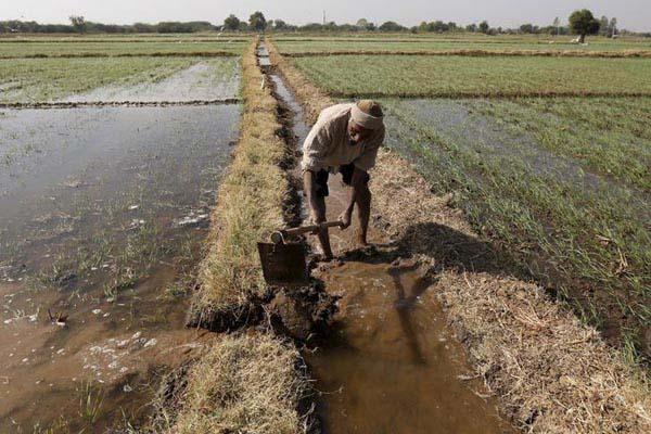 Petani tengah menggarap sawah. - Reuters/Amit Dave
