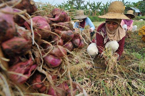 Petani panen bawang merah di Desa Taraban, Pamekasan, Jawa Timur, Senin (2/10/2017). - ANTARA/Saiful Bahri