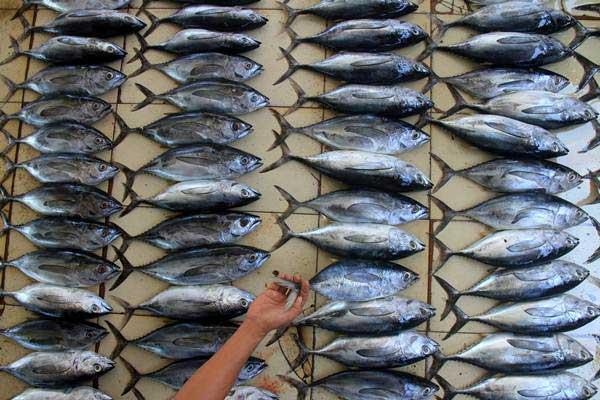 Ilustrasi nelayan menata ikan hasil tangkapannya untuk dilelang. - Antara/Syifa Yulinnas