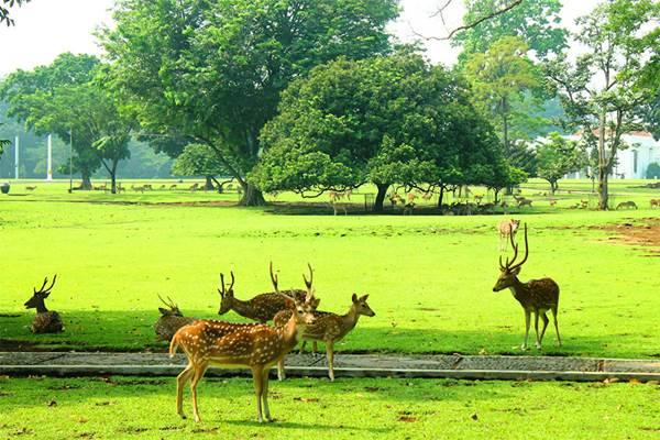 Kebun Raya Bogor - Istimewa