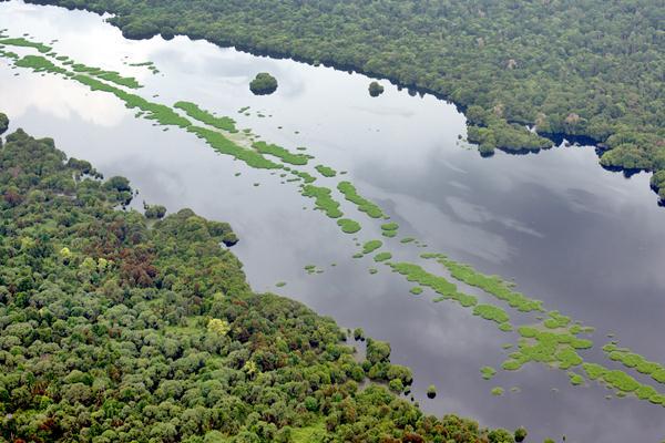 Sungai membelah hamparan hutan alam di Provinsi Riau, Selasa (21/2). - Antara/FB Anggoro
