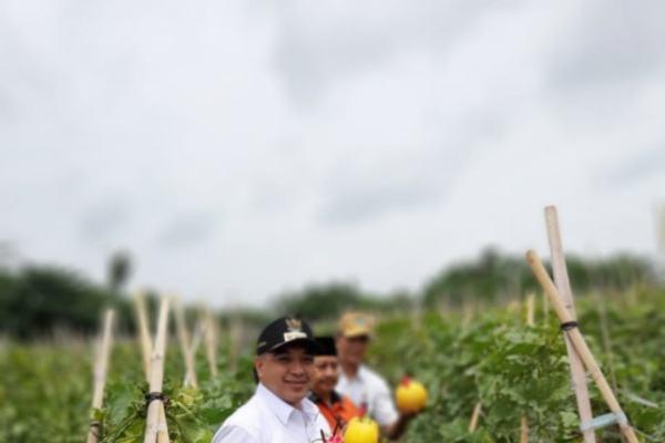 Bupati Tangerang Ahmed Zaki Iskandar memamerkan buah melon hasil panen di Teluk Naga wilayah disekitar Bandara Soekarno Hatta. Teluk Naga merupakan salah satu wilayah pemasok sayuran untuk wilayah DKI Jakarta dan Tangerang Raya - Antara