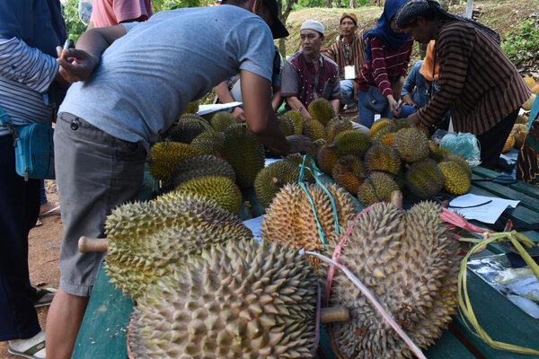 Pengunjung memilih durian saat digelar Festival Durian di Desa Segulung, Dagangan, Kabupaten Madiun, Jawa Timur, Sabtu (26/1/2019). Kegiatan tersebut untuk mendorong petani durian setempat meningkatkan produksi, sekaligus memperkenalkan produk dan makanan berbahan durian kepada masyarakat. - Antara/Siswowidodo