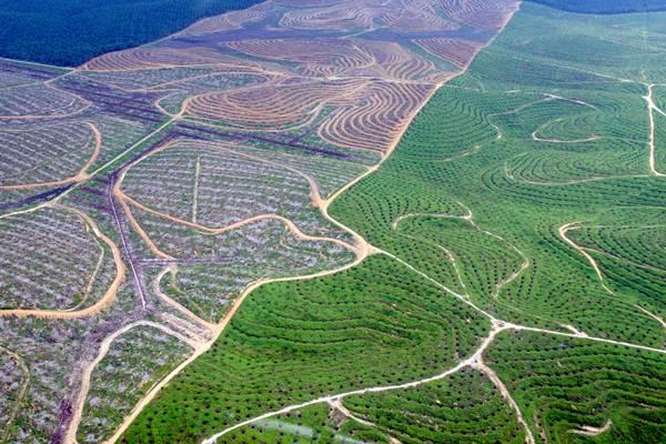 Hamparan perkebunan kelapa sawit membentuk pola terlihat dari udara di Provinsi Riau. Banyak perkebunan sawit di Indonesia yang menggunakan lahan berstatus Hak Guna Usaha. - Antara