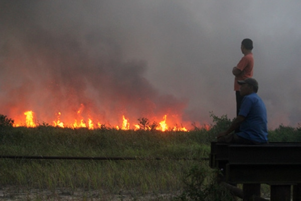 Titik api pemicu kebakaran hutan dan lahan. 54 titik panas di Riau terdeteksi BMKG - Ilustrasi