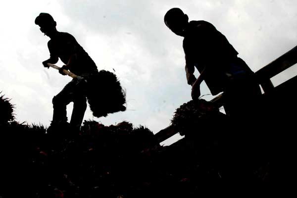 Siluet pekerja merapikan tumpukan kelapa sawit di perkebunan di Jawa Barat belum lama ini. - Bisnis.com/Nurul Hidayat