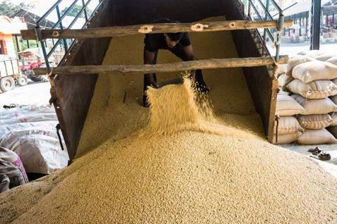 China diperkirakan akan mempercepat putaran pembelian biji kedelai berikutnya. - Ilustrasi/Bisnis.com