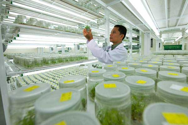 Peniliti beraktivitas di laboratorium PT Riau Andalan Pulp and Paper (RAPP), di Pangkalan Kerinci, Riau. Perusahaan telah berinvestasi dalam penelitian dan pengembangan demi memastikan memperoleh bibit unggul untuk ditanam di hutan tanaman. - Istimewa