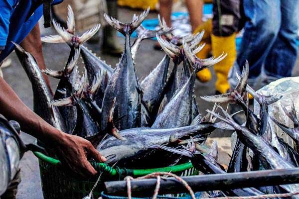 Pedagang mengangkut ikan pasokan dari Pelabuhan Belawan, Medan, untuk dijual kembali di tempat pelelangan ikan Kota Lhokseumawe, Aceh, Kamis (10/1/2019). - Antara/Rahmad