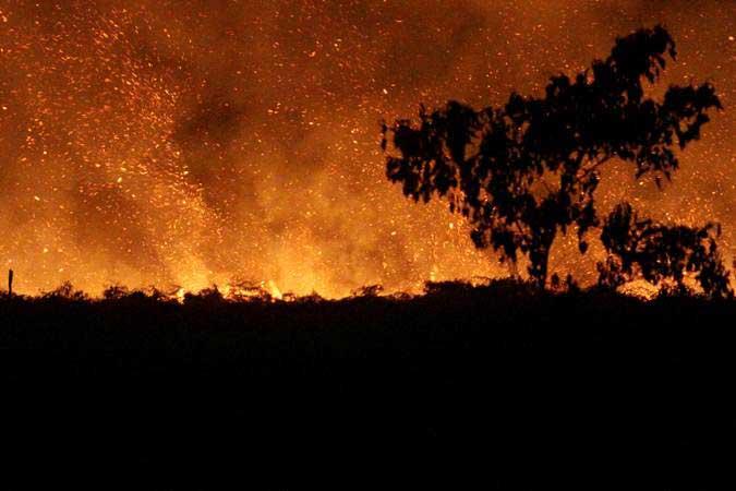 Suasana kebakaran lahan gambut di Desa Lapang, Kecamatan Johan Pahlawan, Aceh Barat, Aceh, Rabu (30/1/2019). - Antara/Syifa Yulinnas