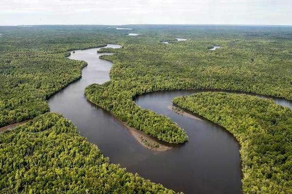 Foto udara sungai berkelok membelah hutan di Kabupaten Mimika, Papua, Senin (29/1). - ANTARA/M Agung Rajasa