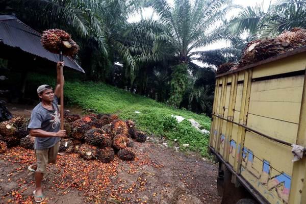 Ilustrasi: Petani memindahkan kelapa sawit hasil panen ke atas truk. - Bisnis.com/Rachman