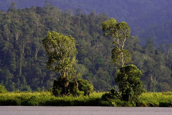 Taman Nasional Lore Lindu - wikipedia