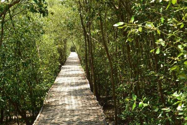 Hutan Mangrove - Istimewa