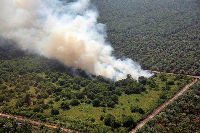 Kebakaran hutan dan lahan perkebunan sawit rakyat terjadi di sejumlah tempat di Desa Bukit Kerikil Bengkalis dan Desa Gurun Panjang di Dumai, Dumai Riau, Senin (25/2/2019). - ANTARA/Aswaddy Hamid