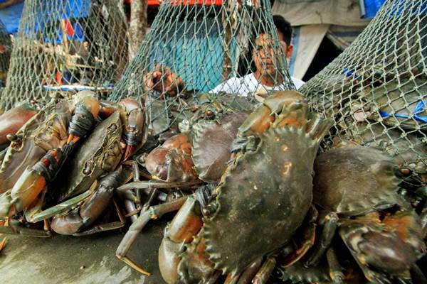Ilustrasi - Pedagang menjual kepiting bakau jenis Scylla serrata dan Kelapa di Lhokseumawe, Aceh, Senin (17/9/2018). - ANTARA/Rahmad