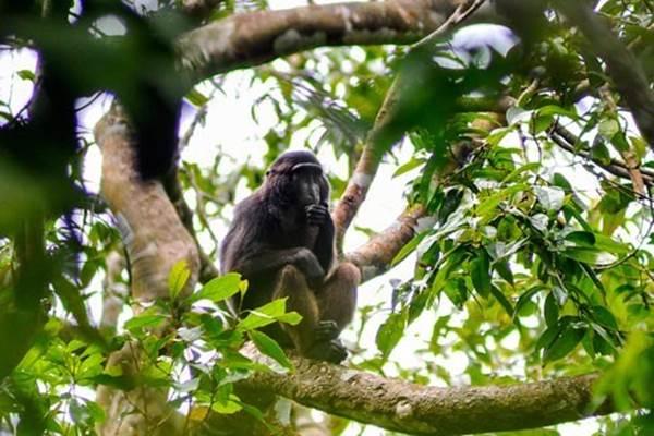 Monyet - Antara