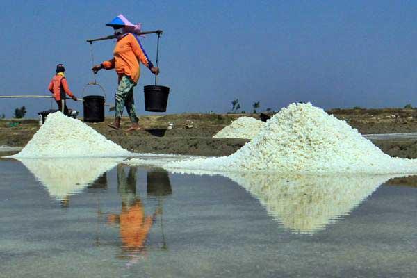 Petani memanen garam - ANTARA