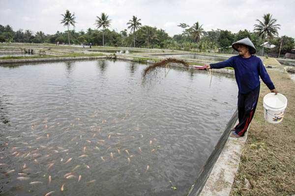 Warga memberi makan ikan di kolam air tawar, Desa Argomulyo, Cangkringan, Sleman, DI Yogyakarta, Rabu (13/9). - ANTARA/Hendra Nurdiyansyah