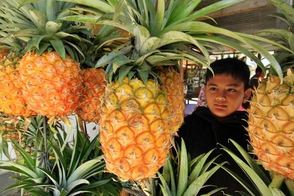 Pembeli memilih buah nenas madu di Kampung Blang Bebangka, Pegasing, Kabupaten Aceh Tengah, Aceh, Minggu (26/3). - Antara/Rahmad