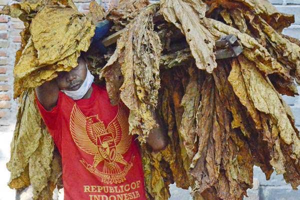 Buruh mengangkat daun tembakau kering untuk disortir di Desa Puyung, Kecamatan Jonggat, Praya, Lombok Tengah,NTB, Kamis (7/9). - ANTARA/Ahmad Subaidi