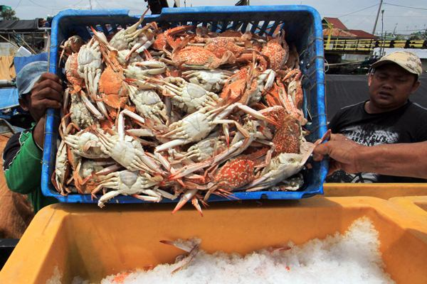 Nelayan menjual rajungan hasil tangkapannya ke pengepul di Pabean udik, Indramayu, Jawa Barat, Jumat (7/4). - Antara/Dedhez Anggara