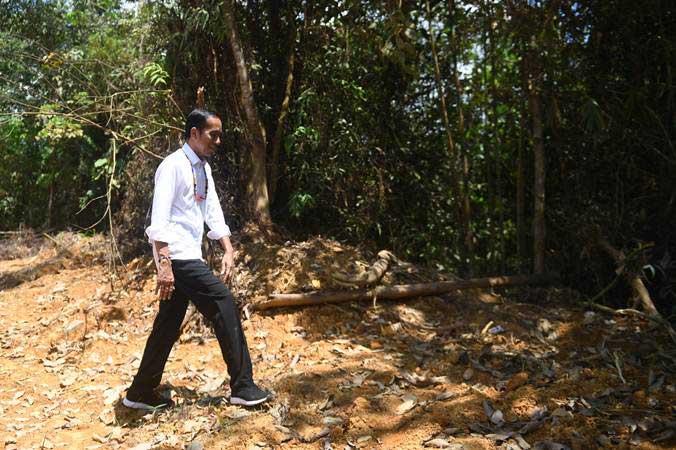 Presiden Joko Widodo berjalan di kawasan hutan saat meninjau salah satu lokasi calon ibu kota negara di Gunung Mas, Kalimantan Tengah, Rabu (8/5/2019). - ANTARA/Akbar Nugroho Gumay