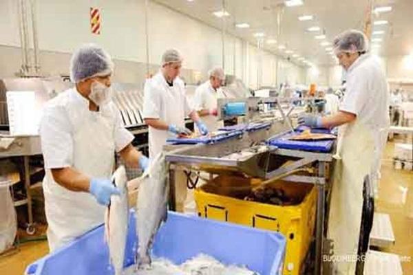 Aktivitas pekerja di industri pengolahan ikan.
