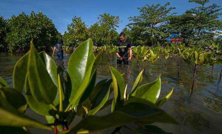 Relawan Mangrove Tomini (Remot) menanam bakau di pesisir pantai Mertasari, Teluk Tomini, Parigi Moutong, Sulawesi Tengah, Senin (22/4/2019). - ANTARA/Basri Marzuki
