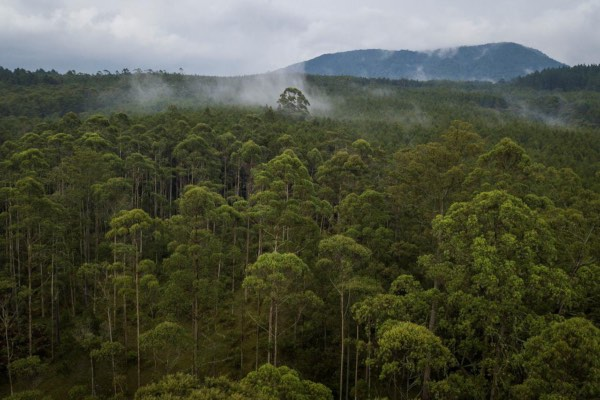Ilustrasi kawasan hutan. - Antara/Raisan Al Farisi