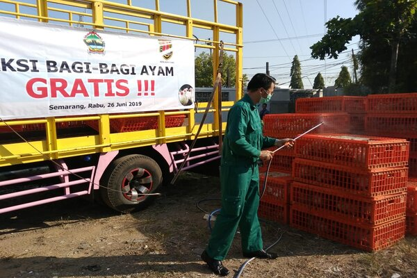 Aksi bagi/bagi ayam gratis di Semarang.