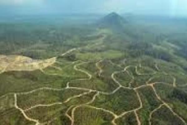 Ilustrasi-Perkebunan sawit di Mimika, Papua. - Antara