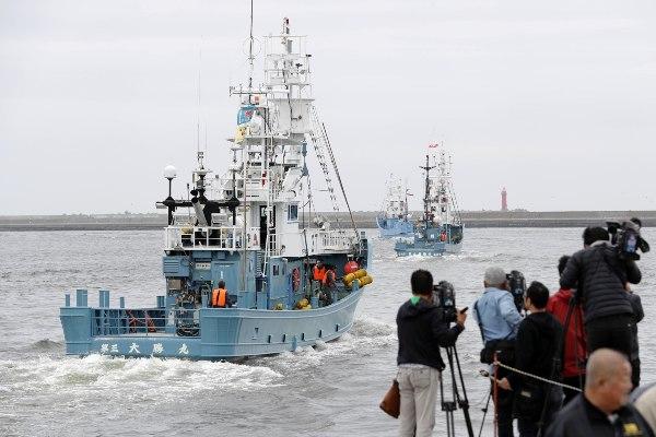 Kapal nelayan yang akan berburu paus meninggalkan sebuah pelabuhan di Kushiro, Hokkaido, Jepang, Senin (1/7/2019). - Kyodo via Reuters