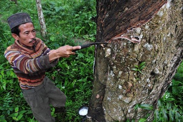 Warga menyadap getah karet di Desa Balai Rajo, VII Koto Ilir, Tebo, Jambi, Selasa (23/4/2019). Harga jual getah di pasar lelang karet desa setempat naik dari Rp.8.500 per kilogram pada bulan lalu menjadi Rp.9.600 dalam beberapa hari terakhir. ANTARA FOTO - Wahdi Septiawan