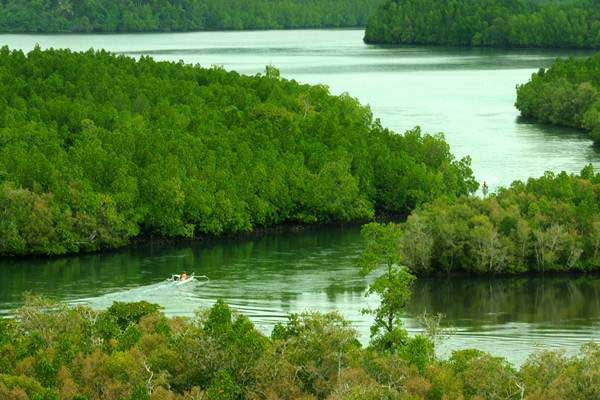 Perahu melintas di kawasan konservasi mangrove. - ANTARA/Fiqman Sunandar