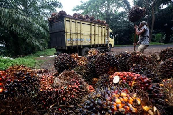 Petani memindahkan kelapa sawit hasil panen ke atas truk di Kabupaten Sukabumi, Jawa Barat. - JIBI/Rachman