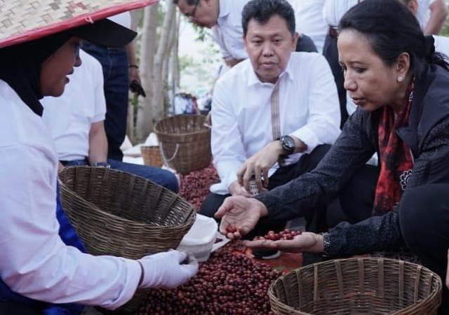 Menteri BUMN Rini Soemarno (kanan) memilah biji kopi - Istimewa