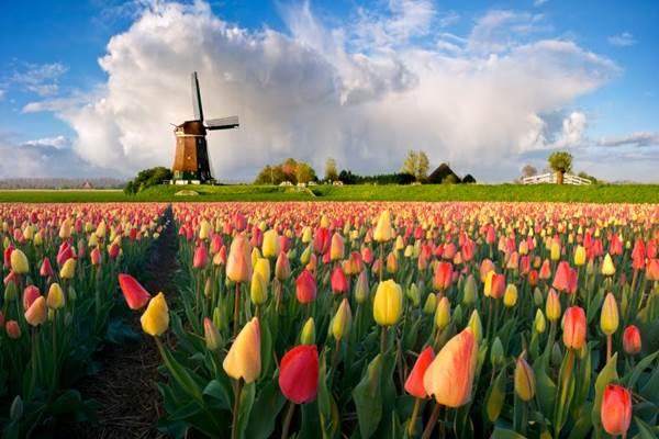 Belanda - depermentier.be