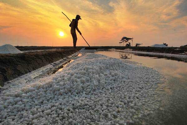 Petani memanen garam di desa Tanjakan, Karangampel, Indramayu, Jawa Barat, Kamis (21/9). - ANTARA/Dedhez Anggara