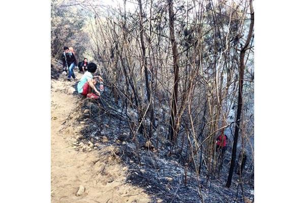 Jejak kebakaran di kawasan Gunung Arjuno - Bisnis/Sukirno