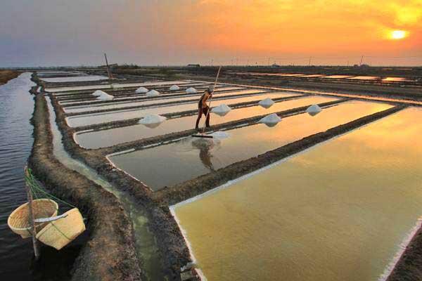 Petani memanen garam di desa Tanjakan, Karangampel, Indramayu, Jawa Barat belum lama ini. - ANTARA/Dedhez Anggara