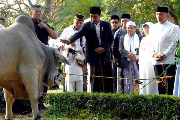 Presiden Jokowi memberikan seekor sapi kepada pengurus masjid Baitul Faidzin, Cibinong, Kabupaten Bogor, Jawa Barat, Rabu (22/8). - Antara