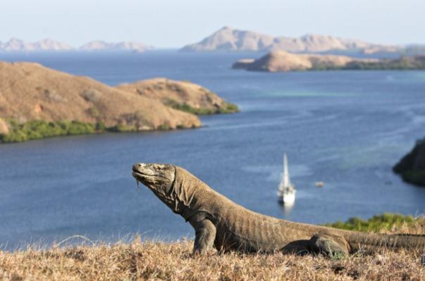 Taman Nasional Komodo. - www.australiangeographic.com.au