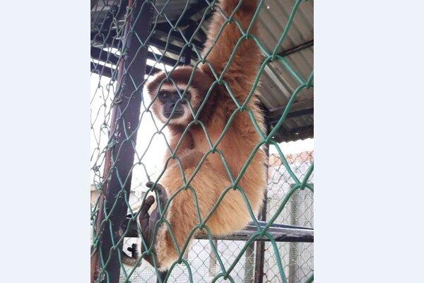 Hewan yang dievakuasi BKSDA Aceh.