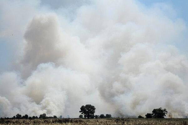 Areal lahan gambut yang terbakar di desa Rambutan, Ogan Ilir, Sumatera Selatan, Rabu (7/8/2019). Berdasarkan data BPBD Sumatra Selatan kebakaran hutan dan lahan di Sumatera Selatan mencapai 257,9 hektare. - Antara/Ahmad Rizki Prabu
