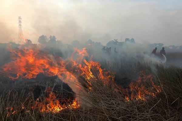 Petugas gabungan memadamkan api yang membakar lahan di Desa Muara Baru, Kabupaten Ogan Ilir, Sumatra Selatan, Sabtu (10/8/2019). Berdasarkan pantauan satelit milik Lembaga Penerbangan dan Antariksa Nasional (LAPAN) terdapat 441 titik api yang terdeteksi di sejumlah wilayah yang ada di Indonesia. -  ANTARA / Mushaful Imam